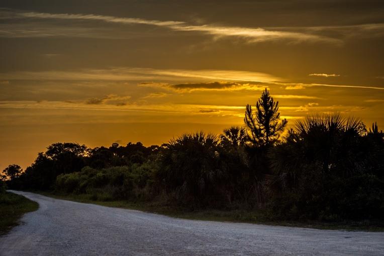 Scrub Sunset