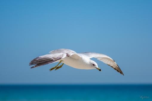 Birding Macro 15