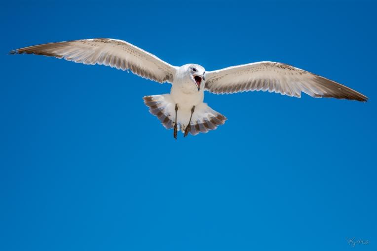 Birding Macro 14