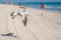 Birding Macro 13