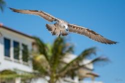 Birding Macro 12
