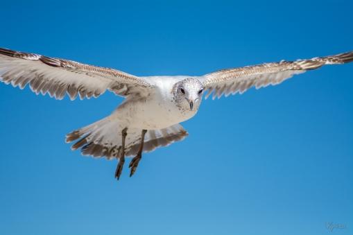 Birding Macro 11