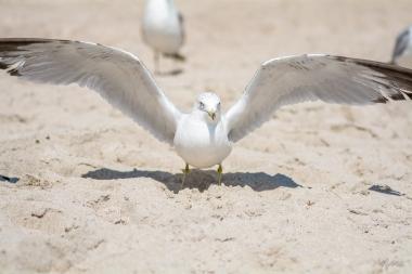 Birding Macro 10