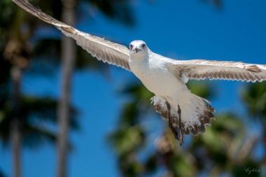 Birding Macro 9