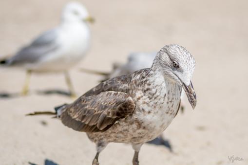 Birding Macro 8