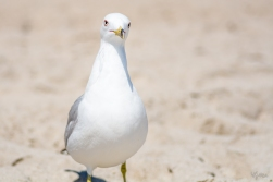 Birding Macro 7