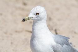 Birding Macro 6