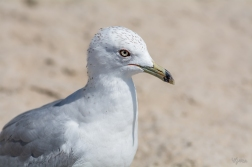 Birding Macro 5