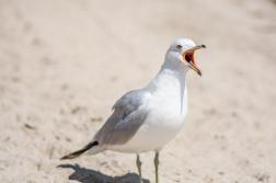 Birding Macro 4
