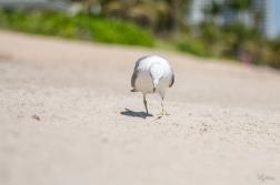 Birding Macro 3