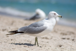 Birding Macro 2