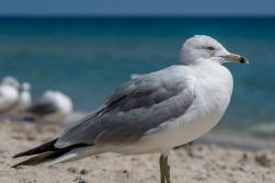 Birding Macro 1