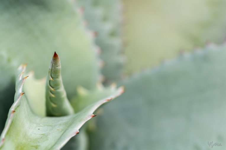 Aloe Zipper