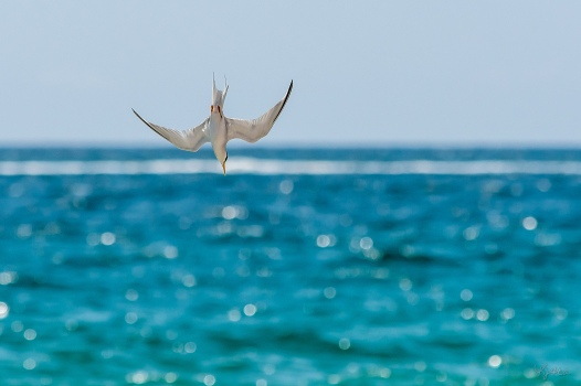A Catch By Tern I