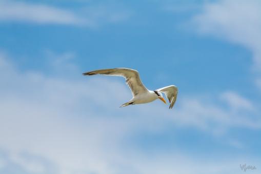 Tern's Turn I