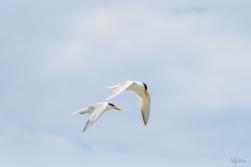 Tern's Turn III