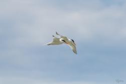 Tern's Turn II