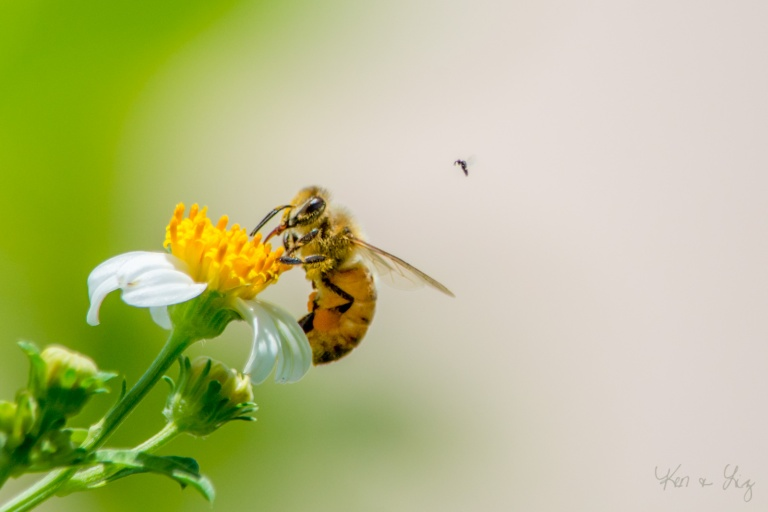 The Subject's Subject