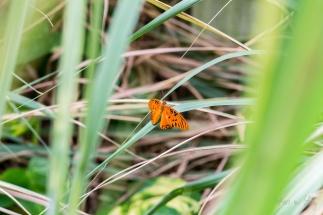 Mariposa Butterfly 1