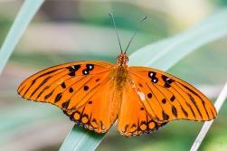 Mariposa Butterfly 6