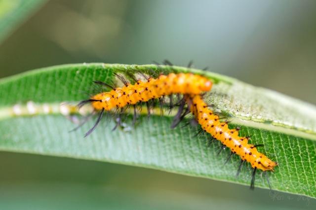 Macro Monday: Caterpillar